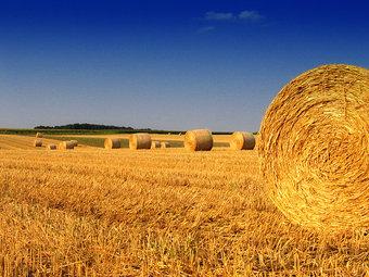 31967-stock-photo-herbst-feld-landwirtschaft-ernte-niedersachsen-strohballen